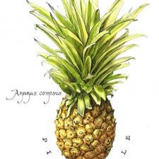 Pinepple